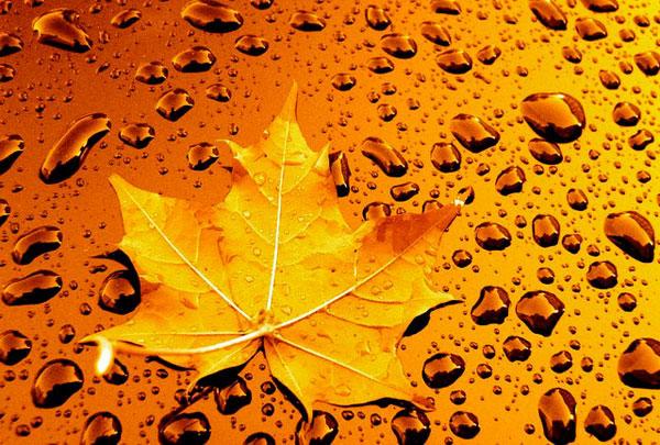 کد زیباساز ریزش برگ های پاییز